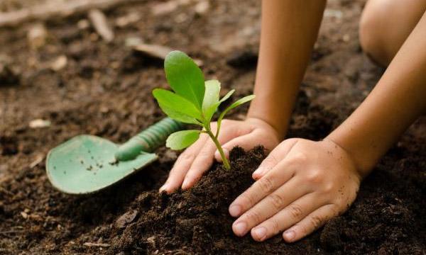 Gardening For Beginners - Tips & Tricks
