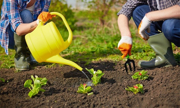 Gardening For Beginners - Tips & Tricks